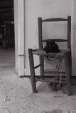在多米尼加共和国的国家边的猫 免版税库存图片