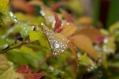 在多色灌木的春雨小滴 免版税库存照片