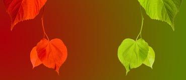 在多色背景的红色和绿色菩提树树枝杈 免版税库存图片