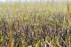 在多雨秋天种植草甸 库存照片