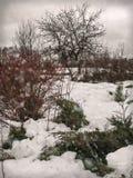 在多雪和多云冬日从事园艺 免版税库存照片