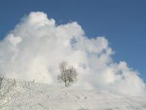 在多雪的冬天风景的树 免版税库存图片