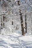 在多雪的冬天风景,垂直的构成的旅游小径 库存图片