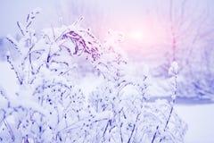 在多雪的分支的冬天样式在日出 镇静冬天背景 在降雪以后的植物 背景能圣诞节使用的例证主题 在结构树的树冰 图库摄影