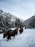 在多雪的地面的牦牛有蓬卡车 库存图片
