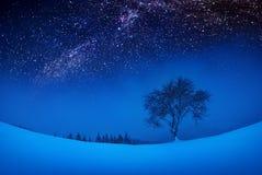 在多雪的小山的偏僻的树 免版税图库摄影