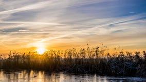 在多雪的小牧场的金黄冬天太阳在芦苇后 免版税库存照片
