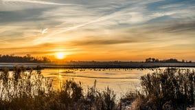 在多雪的小牧场结冰的池塘和树的金黄冬天太阳 免版税库存图片