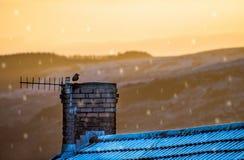 在多雪的屋顶的烟囱栖息的唯一寒鸦在期间冷漠的降雪 免版税库存图片