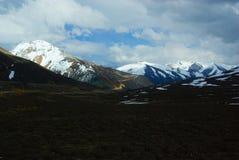 在多雪的山上面的演替系列的植被  免版税库存照片
