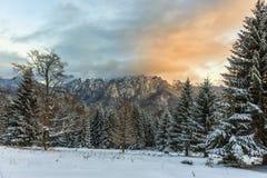 在多雪的山和森林的日落 库存图片