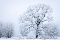 在多雪的有雾的领域的冻树 免版税图库摄影