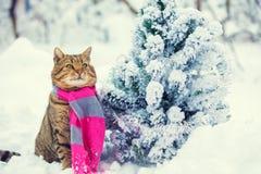 在多雪的杉树附近的一条猫佩带的围巾 免版税图库摄影