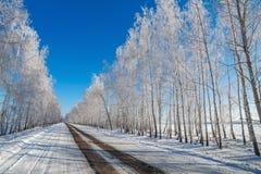 在多雪的树背景的路。 图库摄影