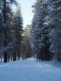 在多雪的森林公路的曲线 免版税图库摄影