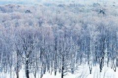 在多雪的森林的冷的蓝色黎明在冬天 免版税图库摄影