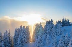 在多雪的森林的日落 库存图片
