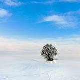 在多雪的横向的偏僻的结构树 免版税库存图片