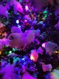在多雪的灌木的圣诞灯 免版税库存图片