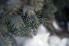 在多雪的背景的冷杉分支 免版税图库摄影