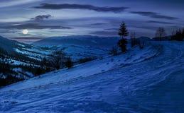 在多雪的草甸的云杉的树山的在晚上 库存图片