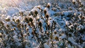 在多雪的草甸的光束 股票视频