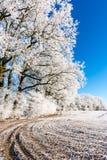 在多雪的草甸的冻小径在几棵树旁边 库存图片