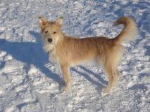 在多雪的道路的狗 免版税库存图片