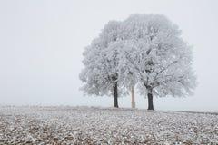 在多雪的领域和薄雾的单独结冰的树 图库摄影