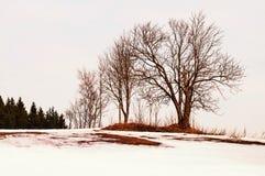 在多雪的风景的光秃的树在日落 免版税库存照片