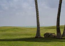 在多巴哥种植园高尔夫球场的第三绿色 库存图片