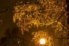 在夜公园durig的风雪 免版税库存图片