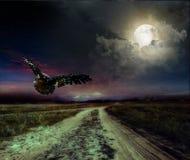 在夜和猫头鹰的路 免版税库存照片