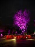 在夜场面的紫色树 库存照片