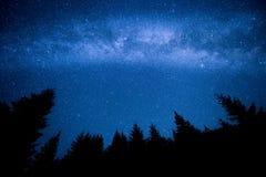 在夜山森林上的银河 库存图片