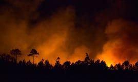 在夜期间,大森林火灾 库存照片