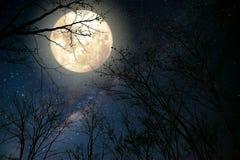 在夜空、满月和老树的美丽的银河星 免版税库存图片