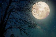 在夜空、满月和老树的银河星 免版税库存图片