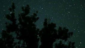 在夜空的移动的星在树 时间间隔 股票视频