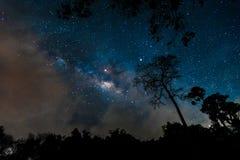 在夜空的美丽的银河星系在森林公园 免版税图库摄影