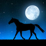 在夜空的马 免版税库存图片
