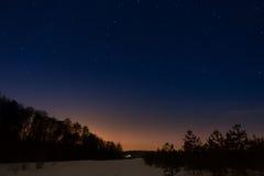 在夜满天星斗的天空的背景的树 免版税库存图片