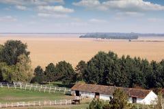 在大农场农田的马 免版税图库摄影