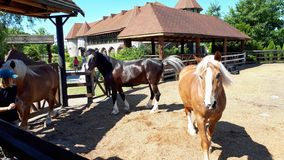 在大农场的三匹马 免版税库存照片