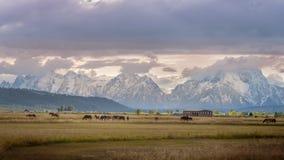 在大农场的日落有跳跃在大蒂顿国家公园旁边的马的 免版税库存图片