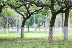 在大农场的树 库存图片
