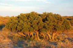 在大农场的树 免版税库存照片