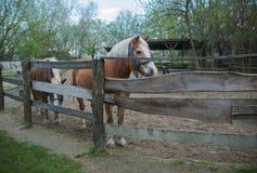 在大农场的马 库存照片