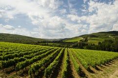 在大制造商的意大利,托斯卡纳喝酒地区 免版税库存图片