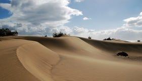 在大加那利岛海岸的沙丘  免版税库存图片